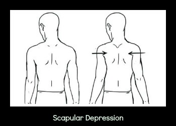 scapular retraction 300